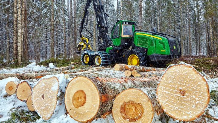 Фото к статье Как отличить зимний лес от летнего