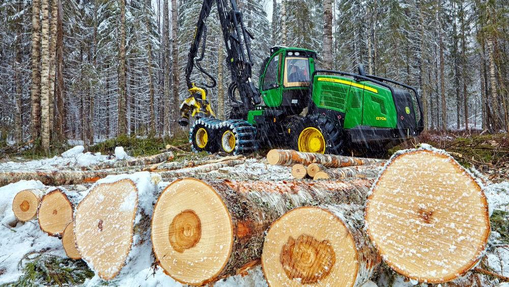 Как отличить зимний лес от летнего